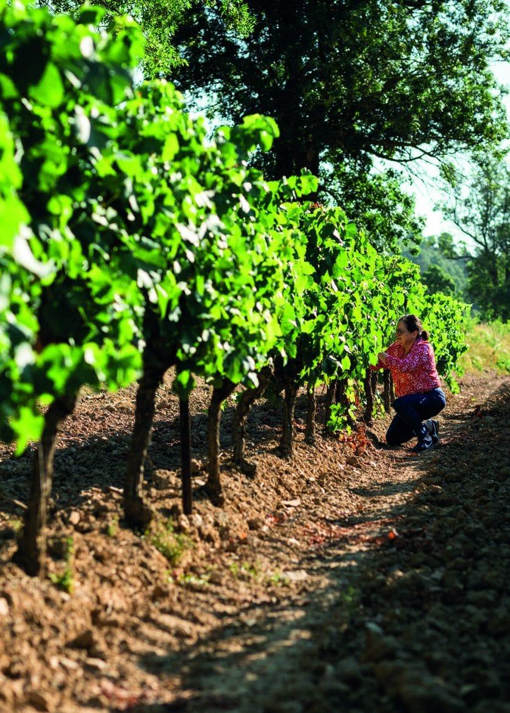 Catherine Delaunay des Jamelles dans les vignes
