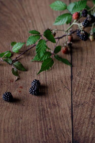 Branche et fruits de mûre sauvage